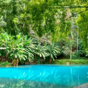 Santuário Ecológico Santa Tereza + Praia do Gunga/AL